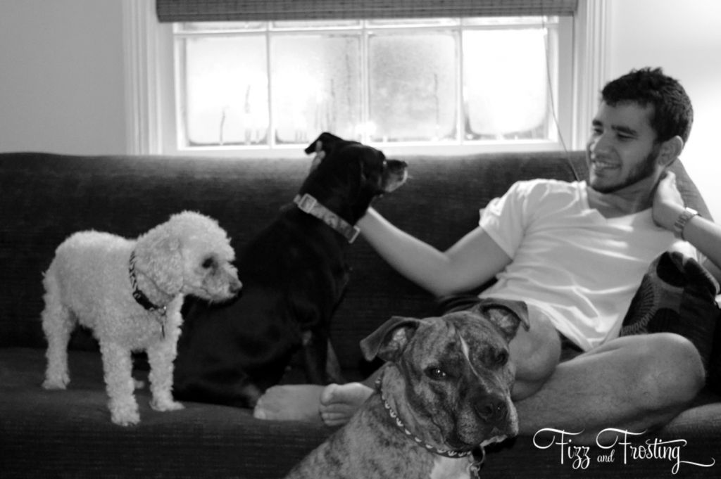 Three dogs couch