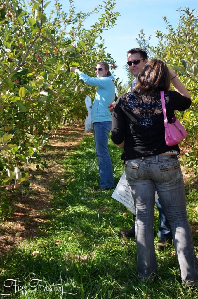 Fuji apple picking orchard