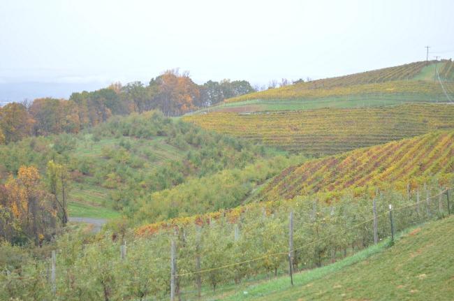 Charlottesville apple picking - Carter Mountain via fizzandfrosting.com